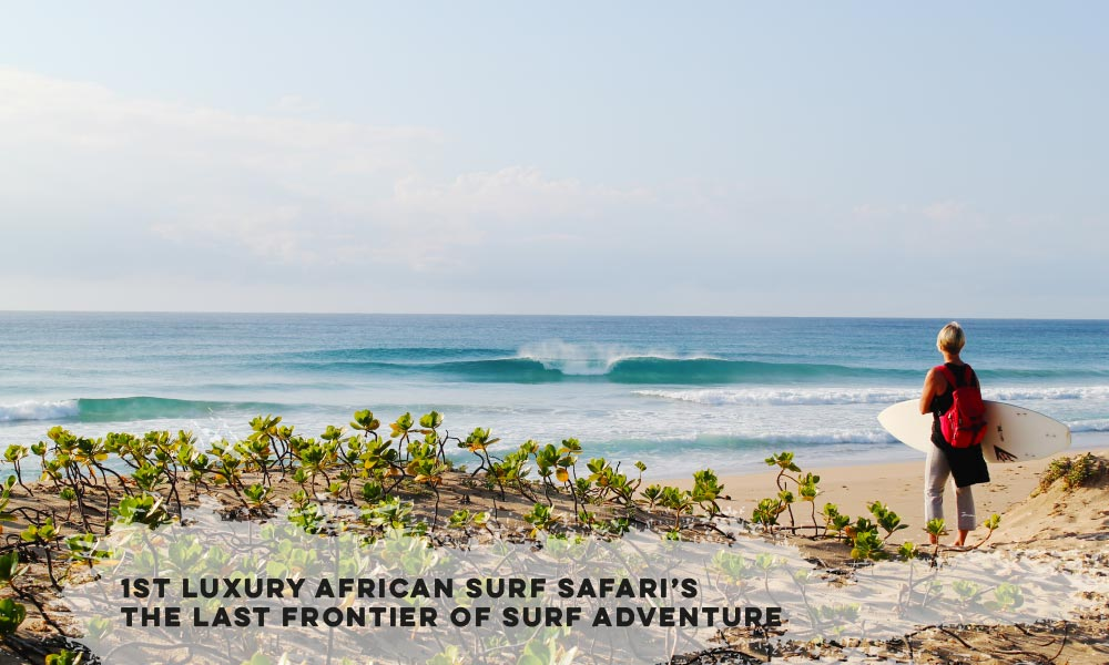 Surf Safaris