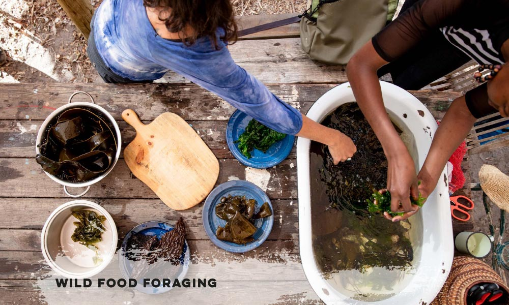 Wild Food Foraging